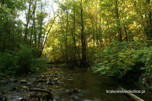 Potok Racławka w dolinie