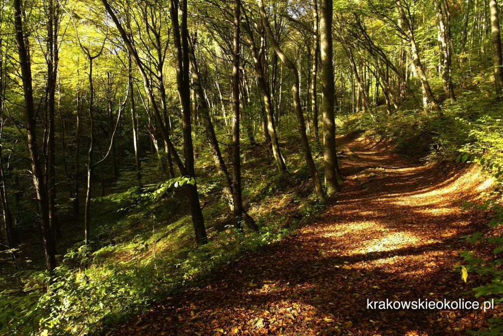 Szlak rowerem i piszo dolina racławki